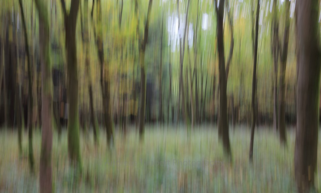 Blurred Local Trunk I