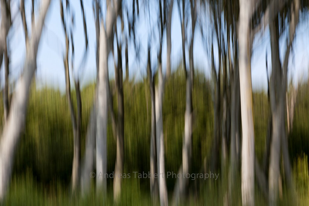Blurred Beech